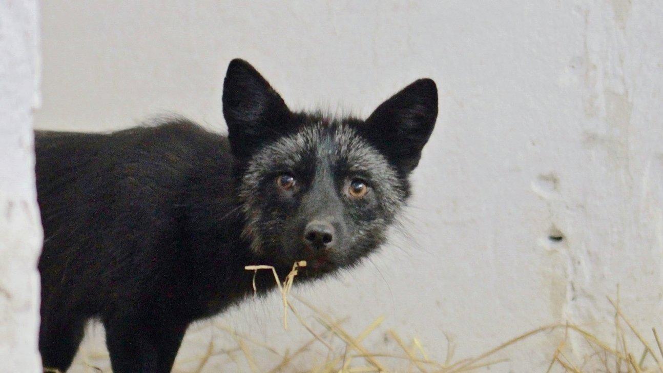 Znalezione obrazy dla zapytania tomasz lewandowski zoo