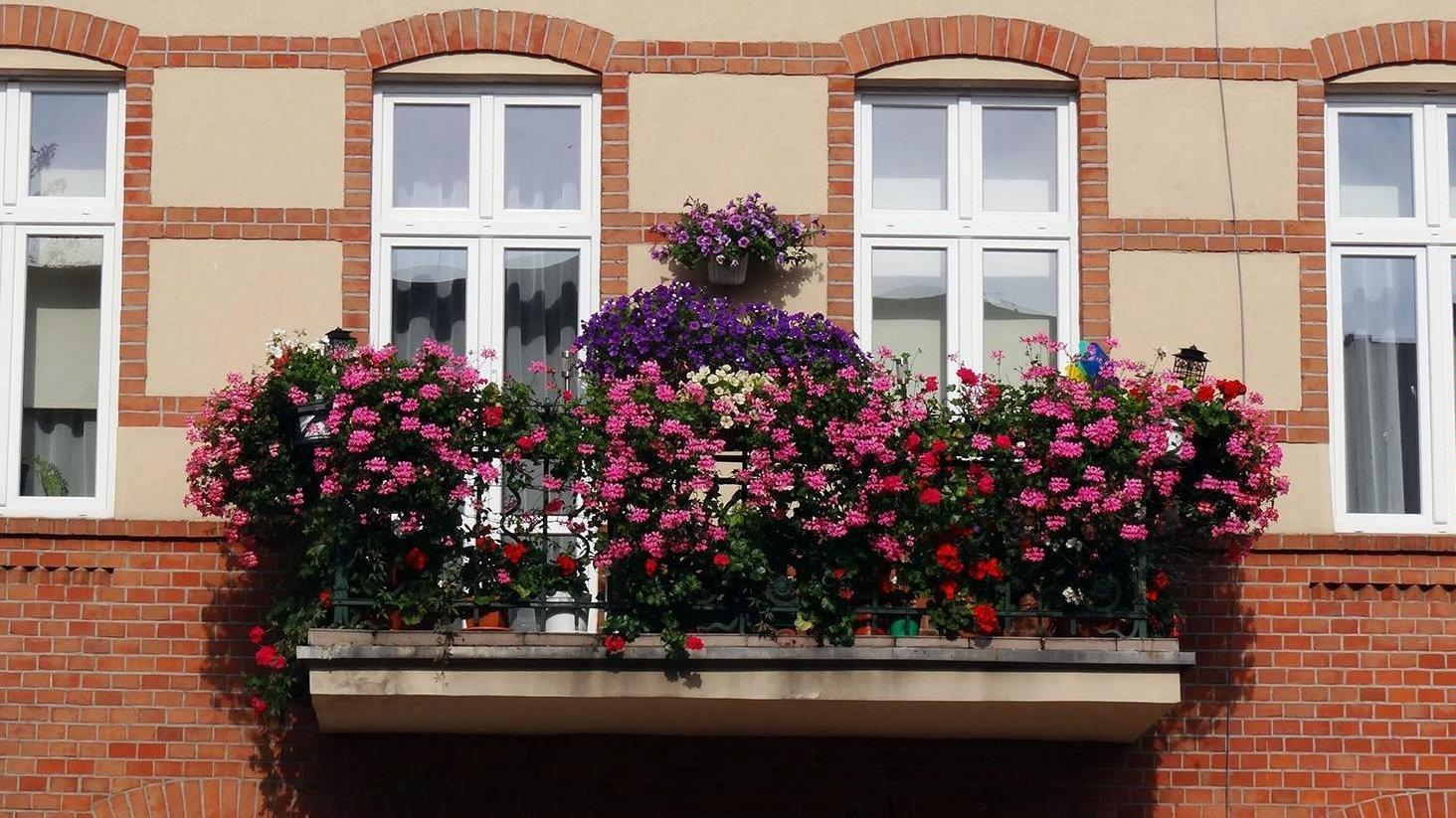 Jeden z balkonów, jakie wzięły udział we wcześniejszej edycji konkursu