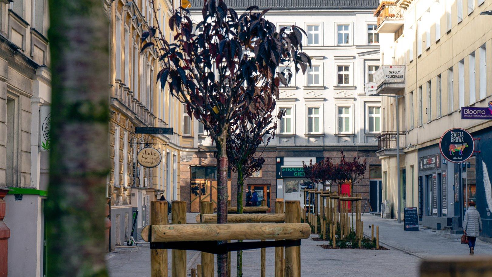 Nowa zieleń na ul. Kwiatowej - grafika artykułu