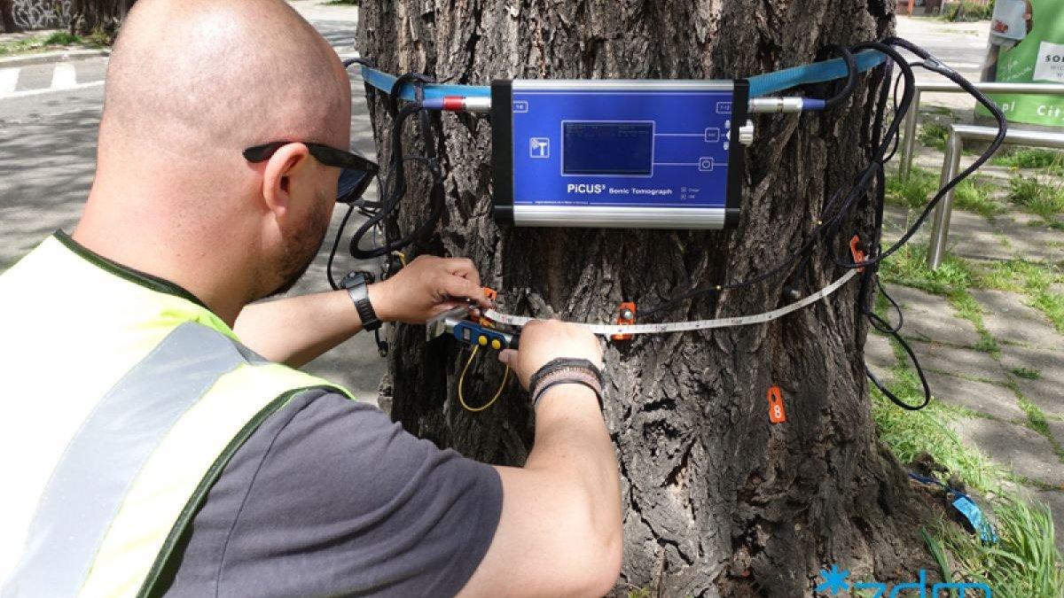 Galeria zdjęć pokazujących badanie drzew - grafika artykułu